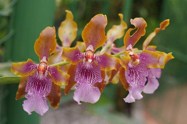 Dracula Orchid Farm