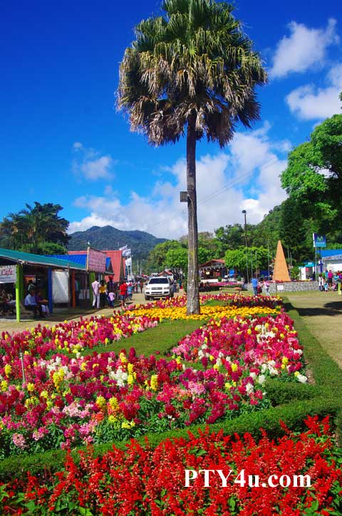 Flower and Coffee Fair